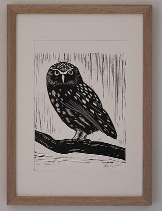 Dorothee the Little Owl (unframed print)