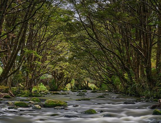 Framed Catlins River