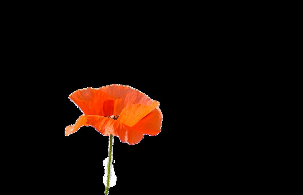 Flagstaff Wedding Flower Poppy