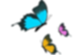 butterfly-1295496_1280.png