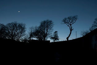 moon tree silouette.jpg