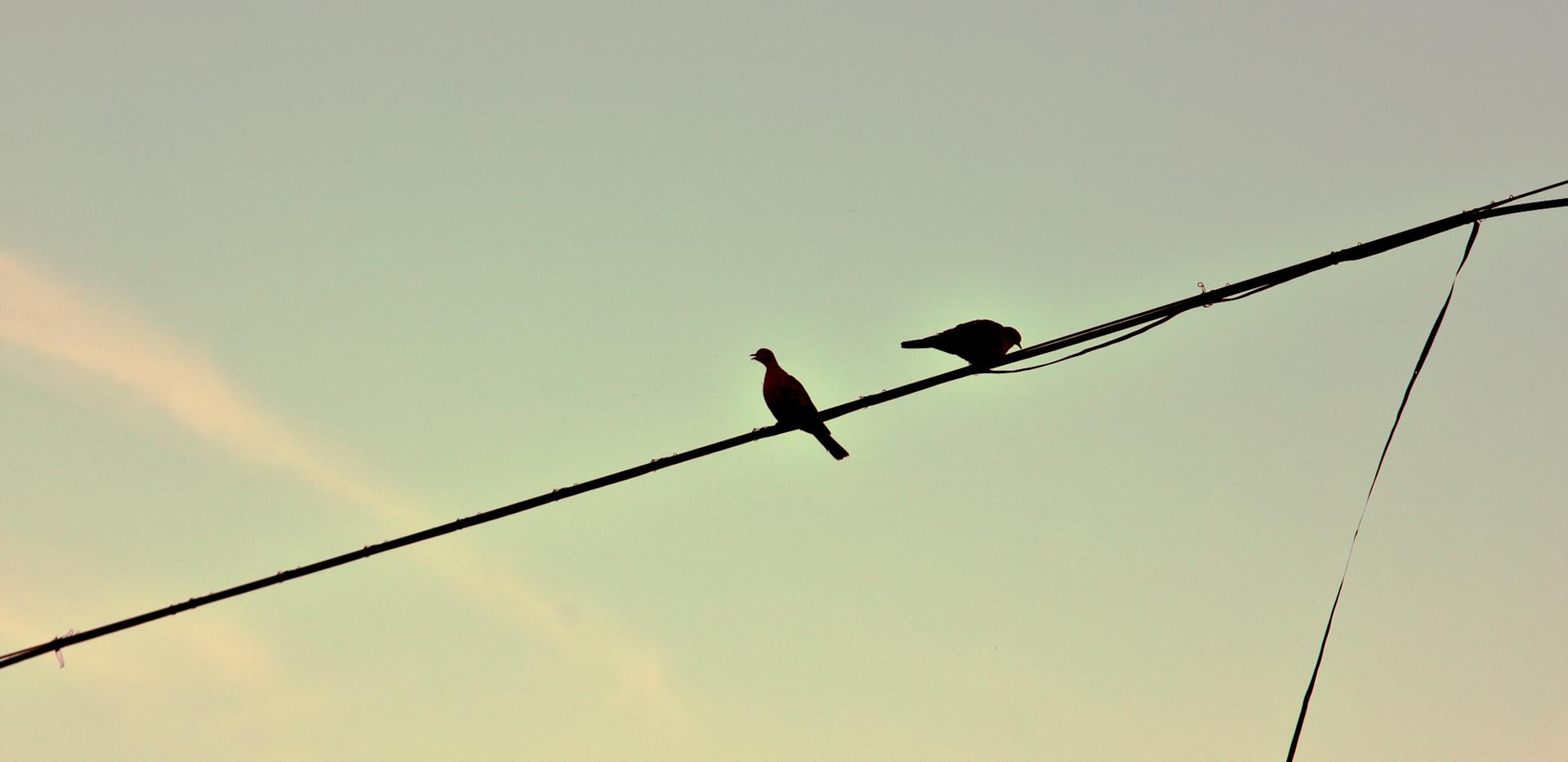 Birds Laura Lago