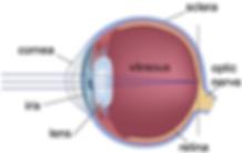 eye-labels_med_hr.png