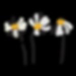 Logo-Images_Black.png