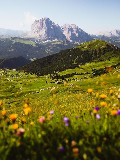 Flora fields