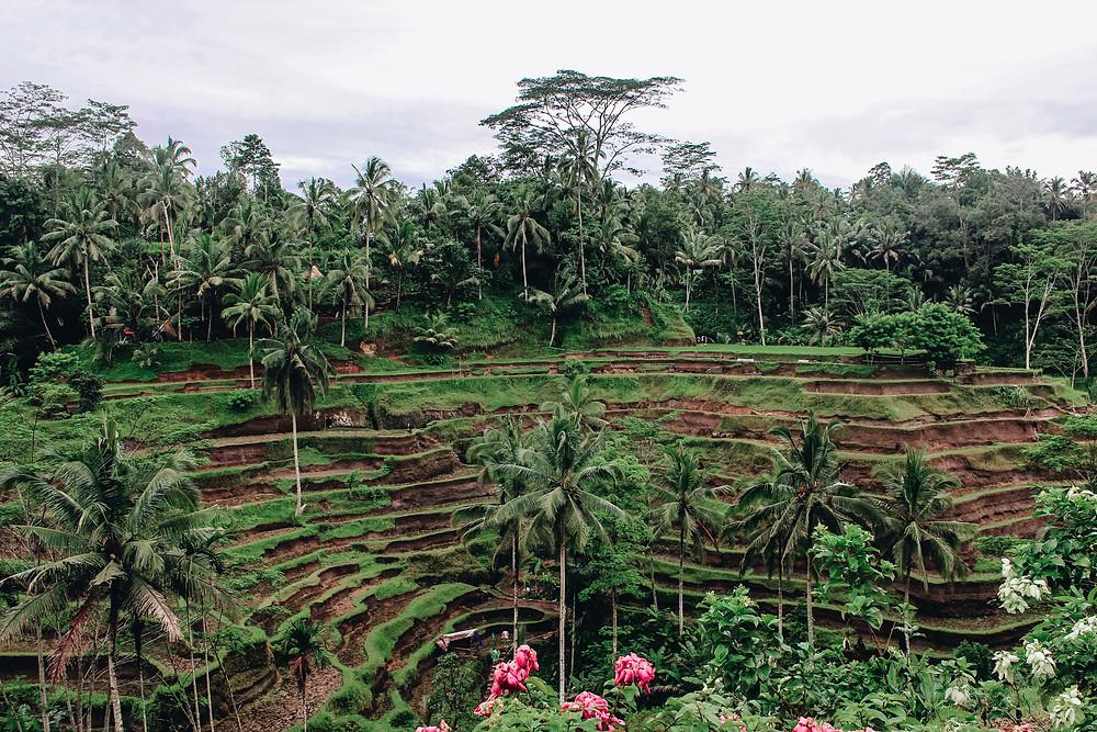 rice terrace indonesia bali famous