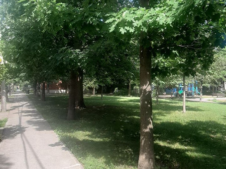Connecting to Nature in Urban Areas: Get to Know Your Local Trees