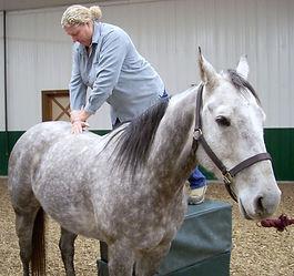 Equine Chiropractic.jpg