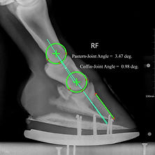 Radiograph of Full Roller Motion shoe