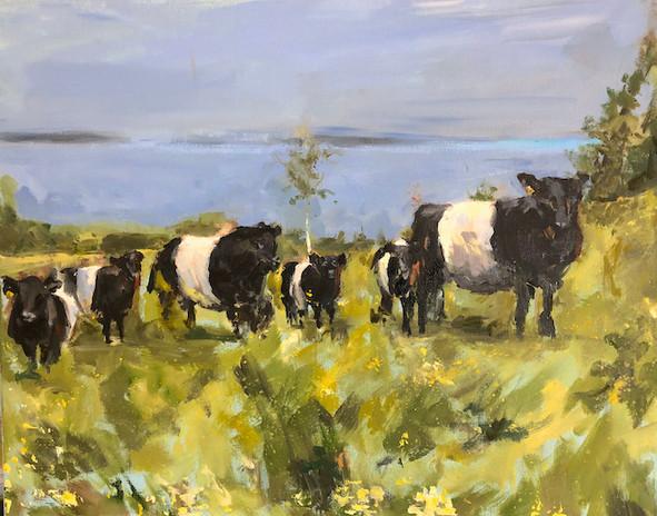 Cows, oil on canvas, 16 x 20, POR