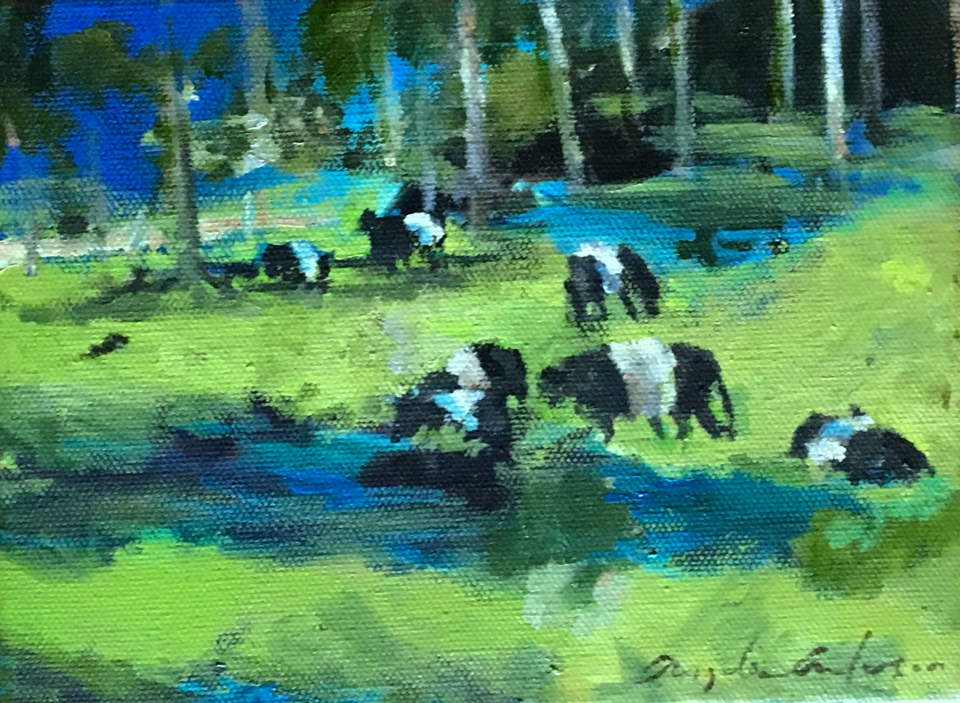 Belted Galloways, private collection