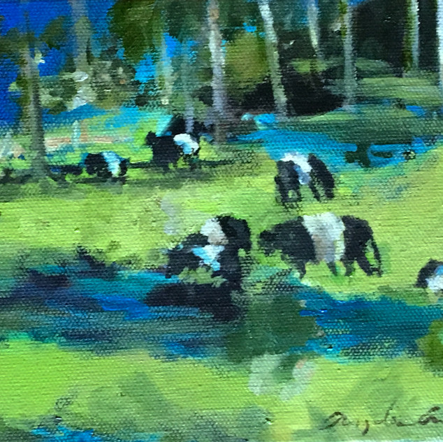 Belted Galloways in the Field