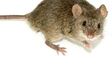 6 Signs You May Have Unwanted Rodents This Season!
