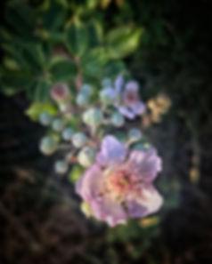 L'été et ses promesses... {Fleurs de Mûr