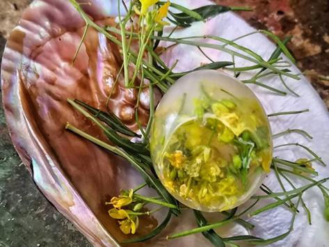 repas sauvage & Nomade au Domaine du Castellas le samedi 7 Décembre