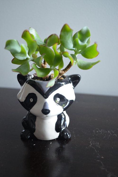 PANDA PLANTER WITH SUCCULENT