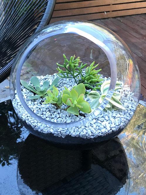 Glass Succulent Bowl