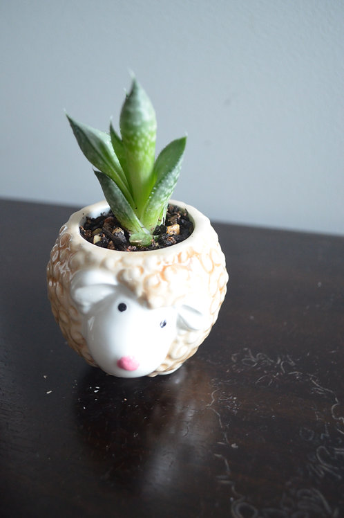 SHEEP PLANTER WITH SUCCULENT
