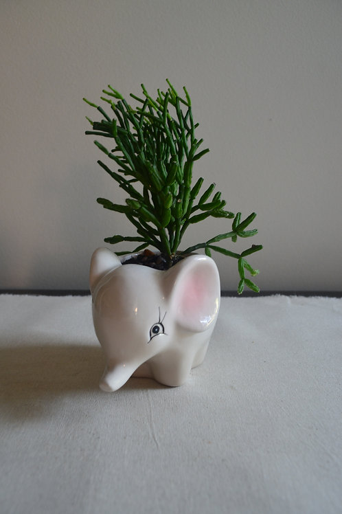 ELEPHANT PLANTER WITH SUCCULENT