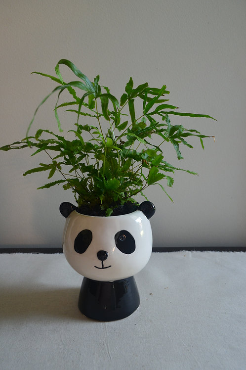 PANDA PLANTER WITH FERN