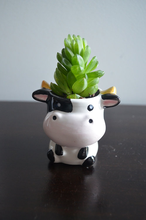 COW PLANTER WITH SUCCULENT