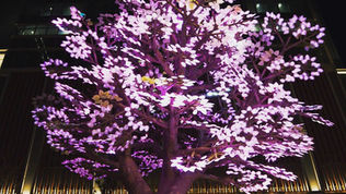Tree of Light -灯桜-