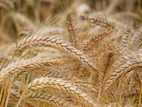 Grain silo and building facility tax win