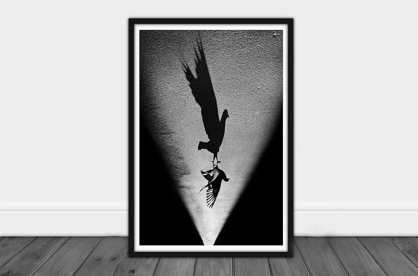 The Dancing Pigeon