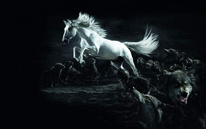 wallpaper-horse-illustration-02.jpg