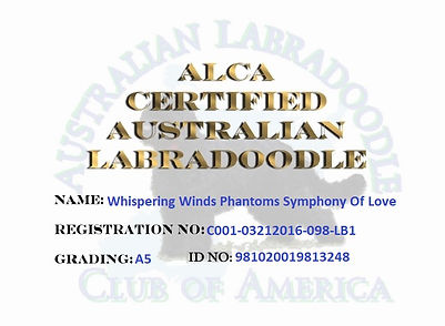 Whispering Winds Phantoms Symphony Of Lo
