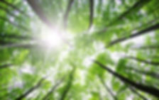forêt, arbre, soleil