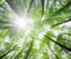 régénérer dans la nature naturopathe cannes