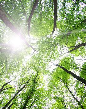 Les arbres forestiers