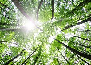 木々に囲まれ生まれ変わる地