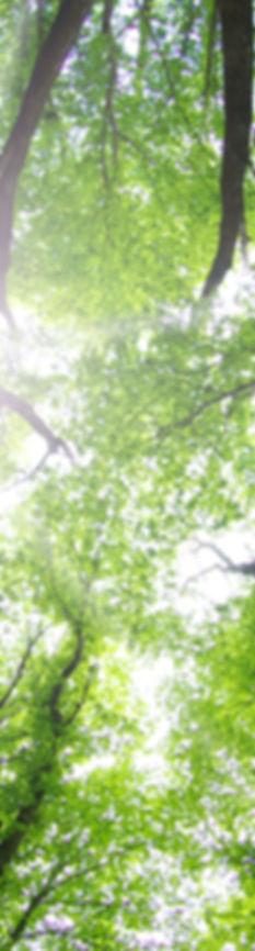 Stage Sophrologie toulouse Gestion du stress Respiration Détente Relaxation Pleine conscience meditation Ecoute du corps