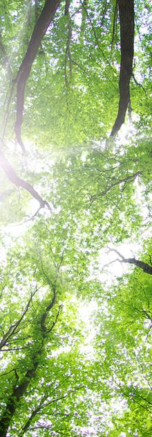 Proteger la Biodiversidad