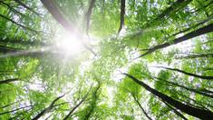 Sunbathing in Spring | Boost Yang Energy