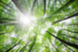 New Horizon Corporation | Forest Canopy