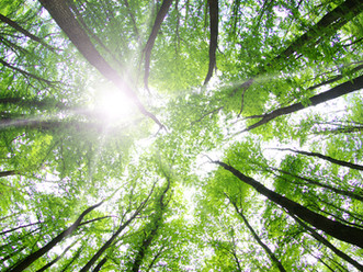 How can we protect our forests?