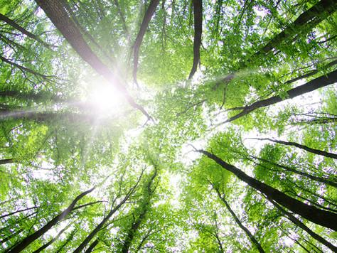 Can Faith Be Green?