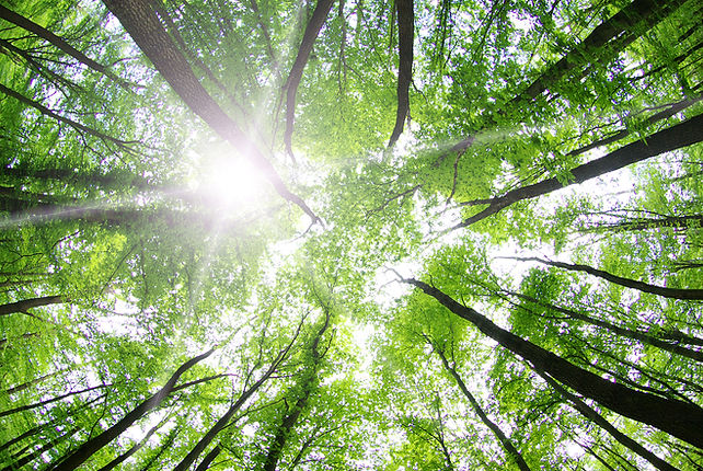 A bottom-up view of trees and the sunshine.