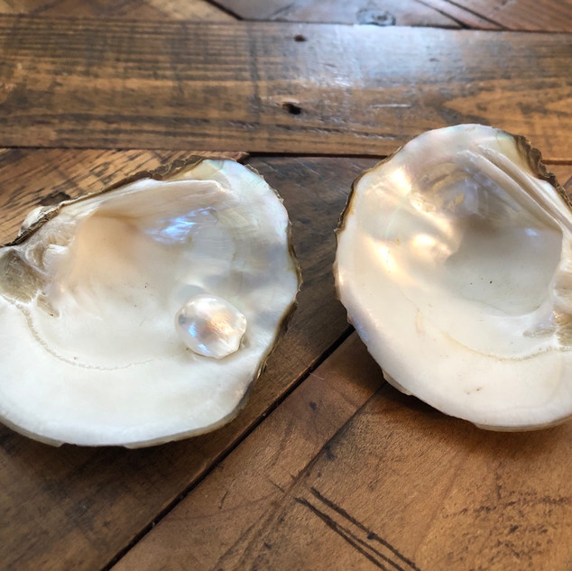 Raw clamshell pearls