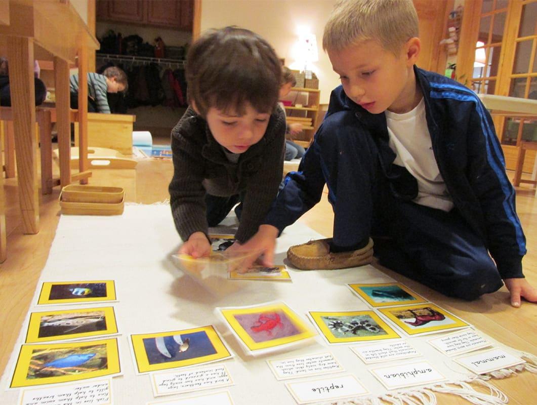 primary Montessori Science Cards