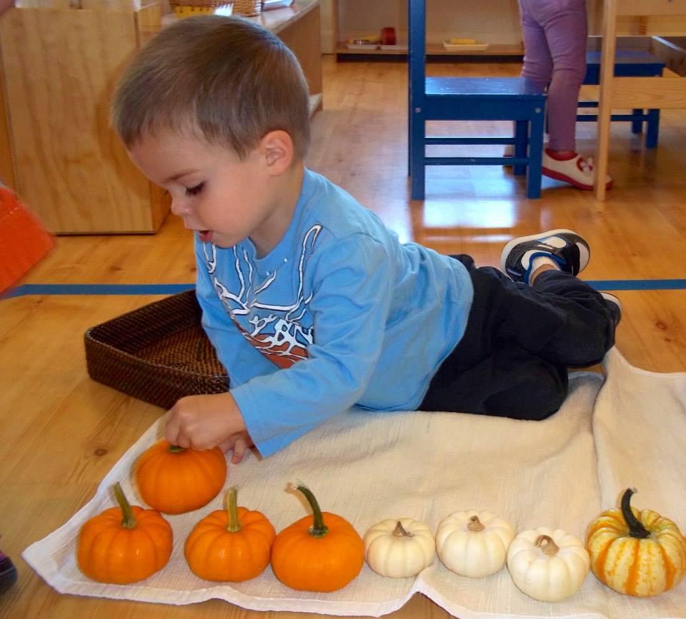 Toddler pumpkin sorting