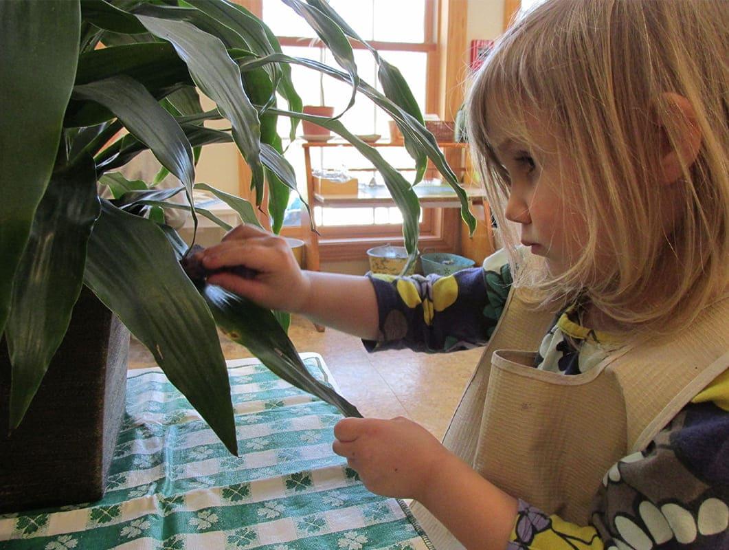 Primary Montessori Botany Care