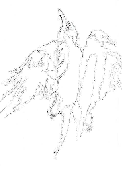 """Alx Bednarz """"Sketch - Free Bird"""" (2017) Bleistift, 21x30"""