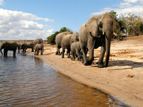 Quick Guide to the African Safari (Chobe National Park)