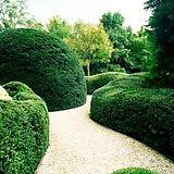 happy hedges.jpg