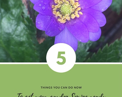 5  things you can do NOW to get you and your garden Spring Ready.