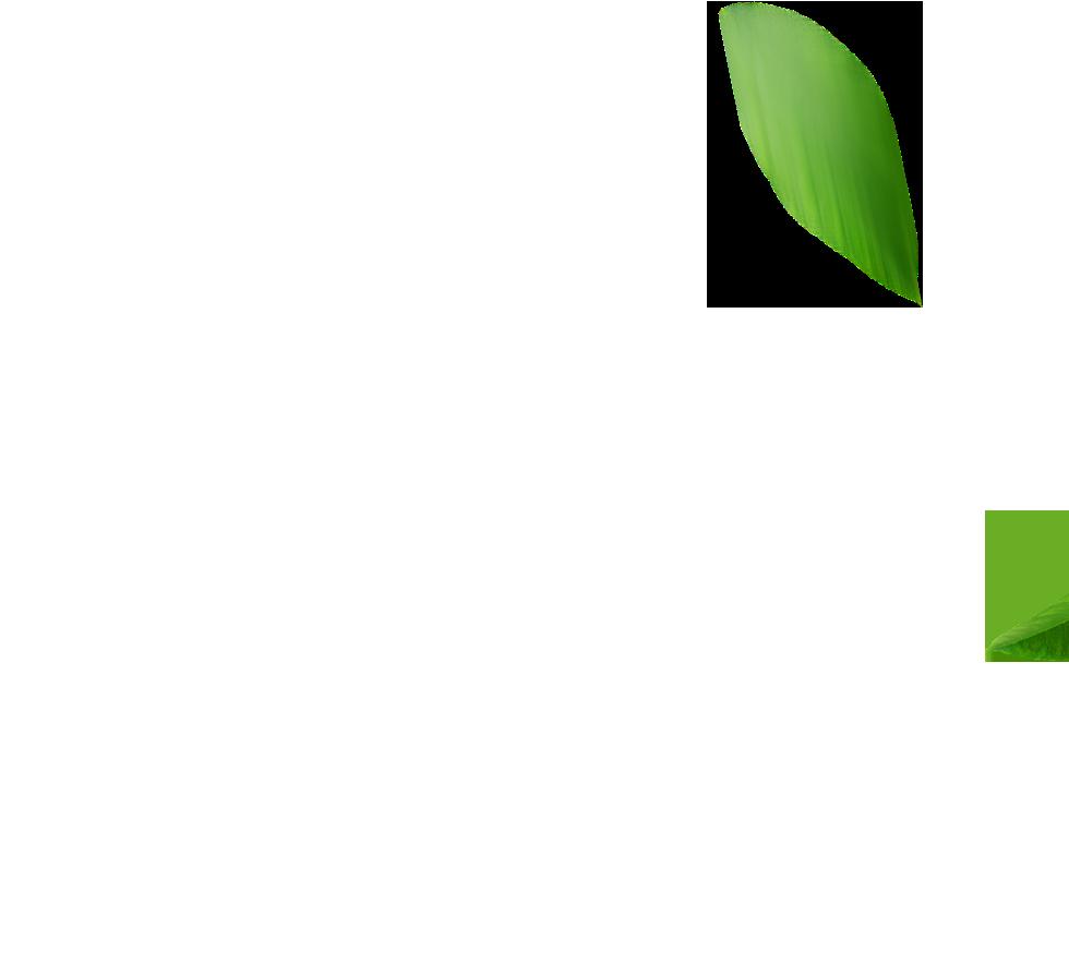 Folhas EcoValor Consultoria em Sustentabilidade